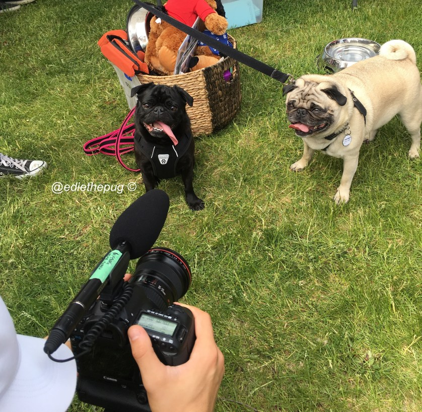 Adventures at Woofstock 2016