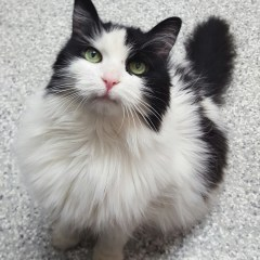 Ontario SPCA's Adoptable Pet of the Week – Audrey