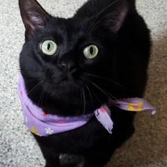 Adoptable Pet of the Week – Queen Latifah