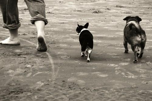 Walking a Reactive Dog