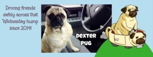 Interviews from Edie's Pug House - Dexter Pug the Pug