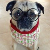 Interviews from Edie's Pug House – Dexter
