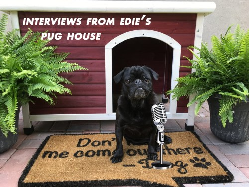 Interviews from Edie's Pug House - Dexter Pug