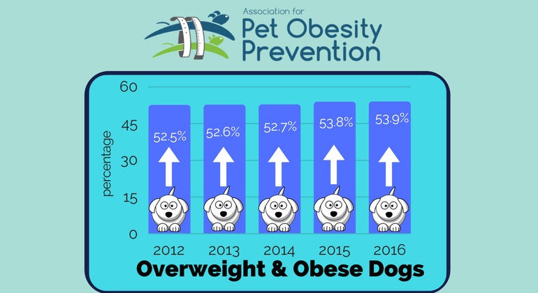 Pet Obesity Awareness Day