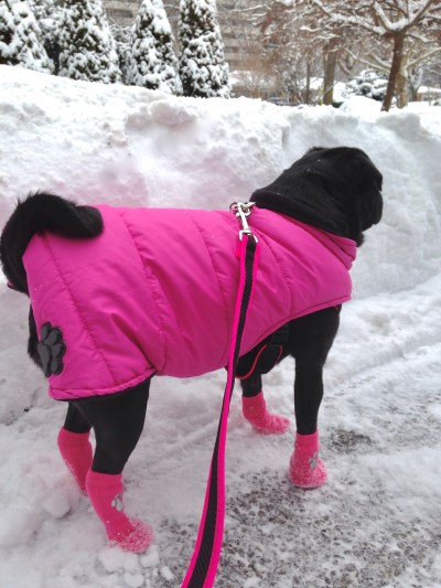 Dog Clothing - Fashion Statement or Necessity?