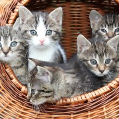 You've Adopted a Kitten – Now What?