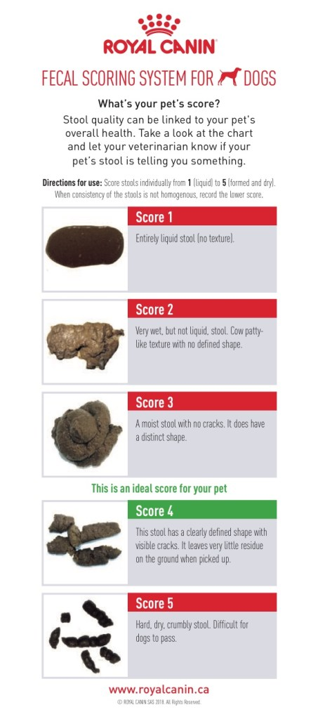 The Scoop on Dog Poop