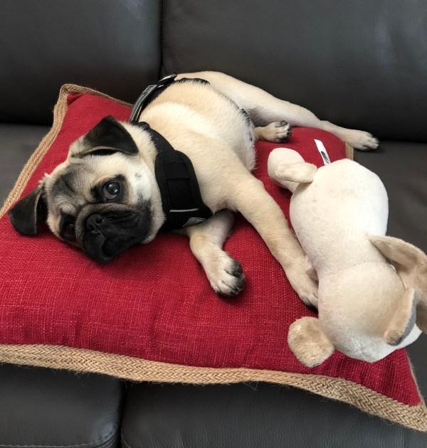 Puppy's First Year - Month 10
