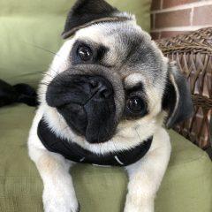 Puppy's First Year – Month 10