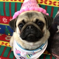 Puppy's First Year – One Year Old!
