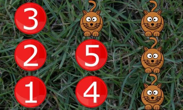 Animal numbers app