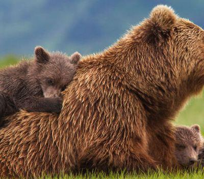 Sneak Peak: Disneynature Bears: In theaters April 18
