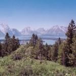 Grand Teton NP through pines