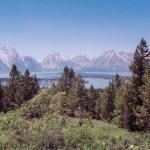 Grand Teton NP through pines