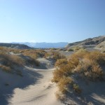 Death Valley NP Salt Creek dunes