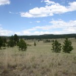 Florissant Fossil Beds NM Rocky Mountain meadow