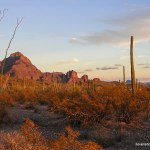 Organ Pipe Cactus NM Ajo Mountains