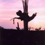 Saguaro NP sunset silhouette