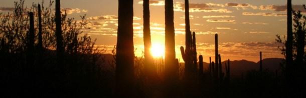 saguaropano