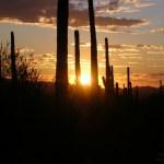 Saguaro NP sunset