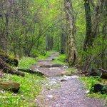 Appalachian Trail in Shenandoah NP
