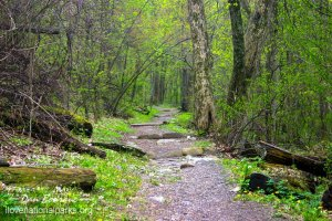 Appalachian Trail in Shenandoah NP
