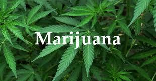 Let's Talk about Marijuana…