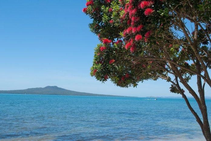 rangitoto-island