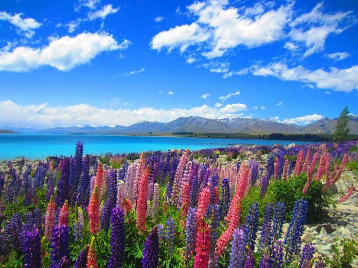 South Island New Zealand
