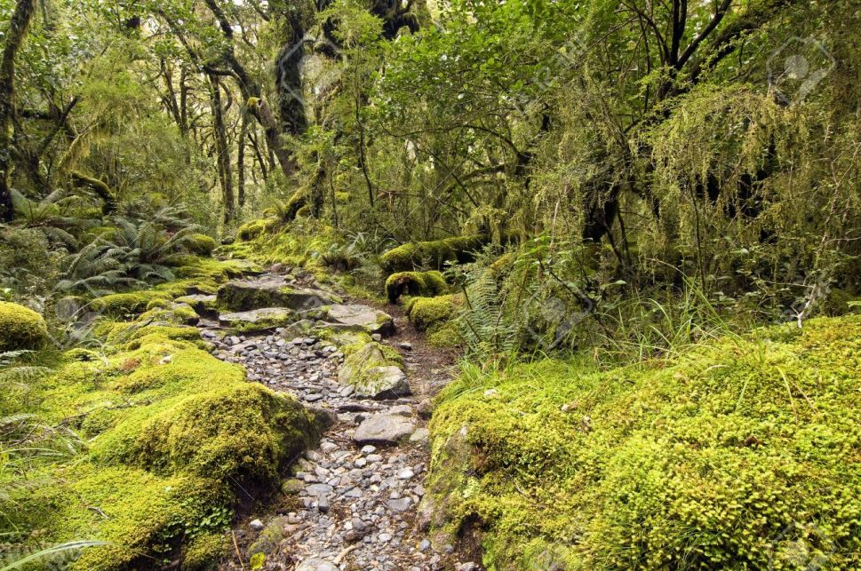 forest in NZ