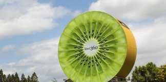 nz kiwifruit