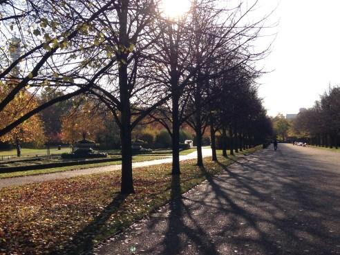 SUN THROUGH THE TREES IN REGENT'S PARK.   © 2013 iLovePrimroseHill.com
