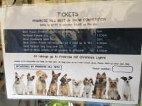 DOG SHOW CLASSES