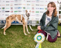 BLIND DOG SCOUT, RESERVE BEST IN SHOW. photo Julia Claxton.