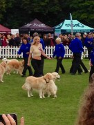 RACHEL RILEY TAKING PART IN THE SOUTHERN GOLDEN RETRIEVER TEAM DISPLAY