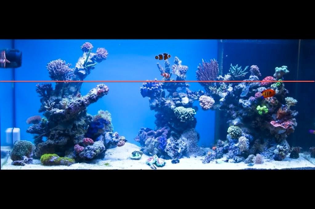 Aquascape Ideas Sps Reef Tank Aquascape