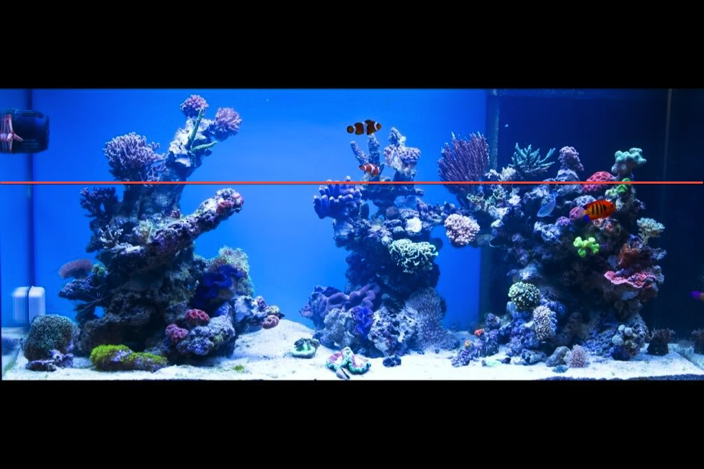 Perfect Aquascaping Tip U2013 Donu0027t Build Your Reef Too High!