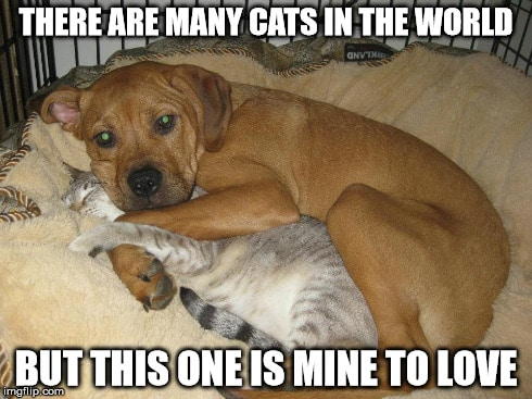 Funny Cuddle Memes And Images 061