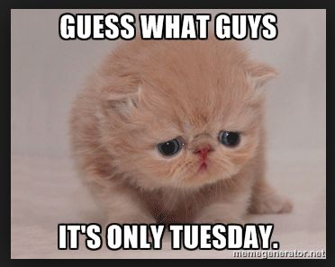 Funny Meme For Tuesday : Happy tuesday memes images and tuesday motivational quotes