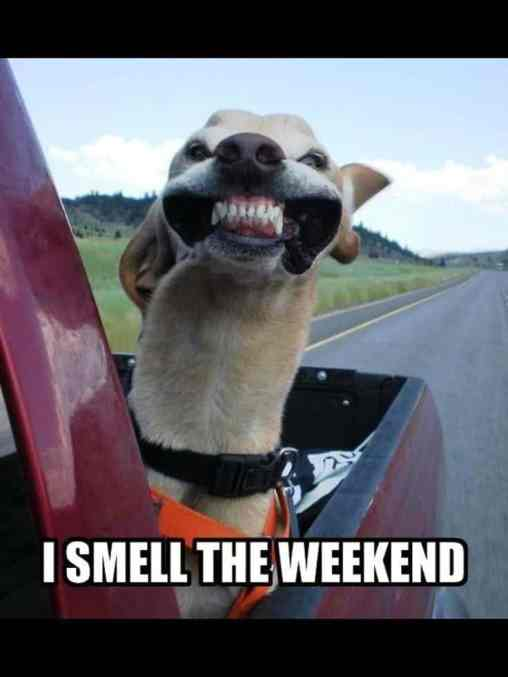 Funny Meme Emails : Happy weekend messages memes with saturday quotes and images