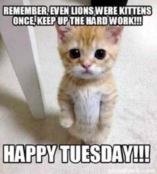 Funny Meme For Tuesday : Happy tuesday memes images and motivational quotes