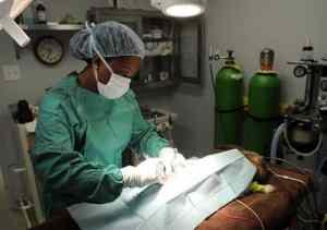 Veterinary Surgery dog, Veterinary Specialties