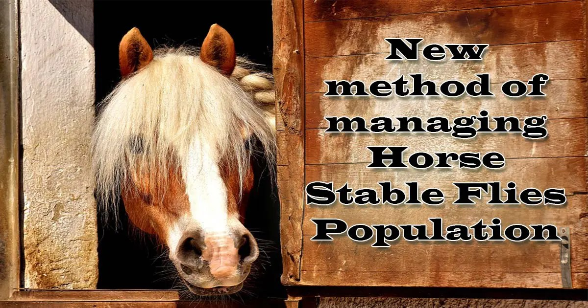 New method of managing Horse Stable Flies Population