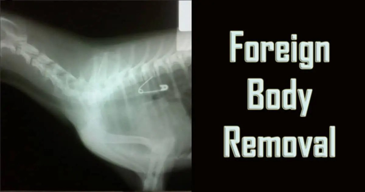 Foreign body removal safety pin xray endoscopy