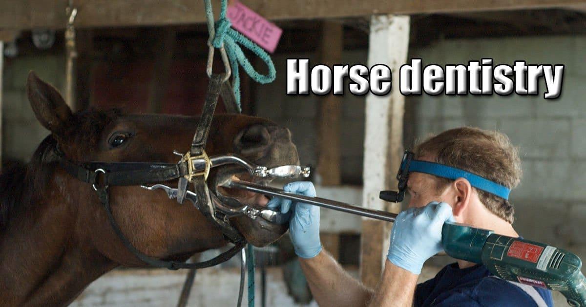 Horse dentistry video