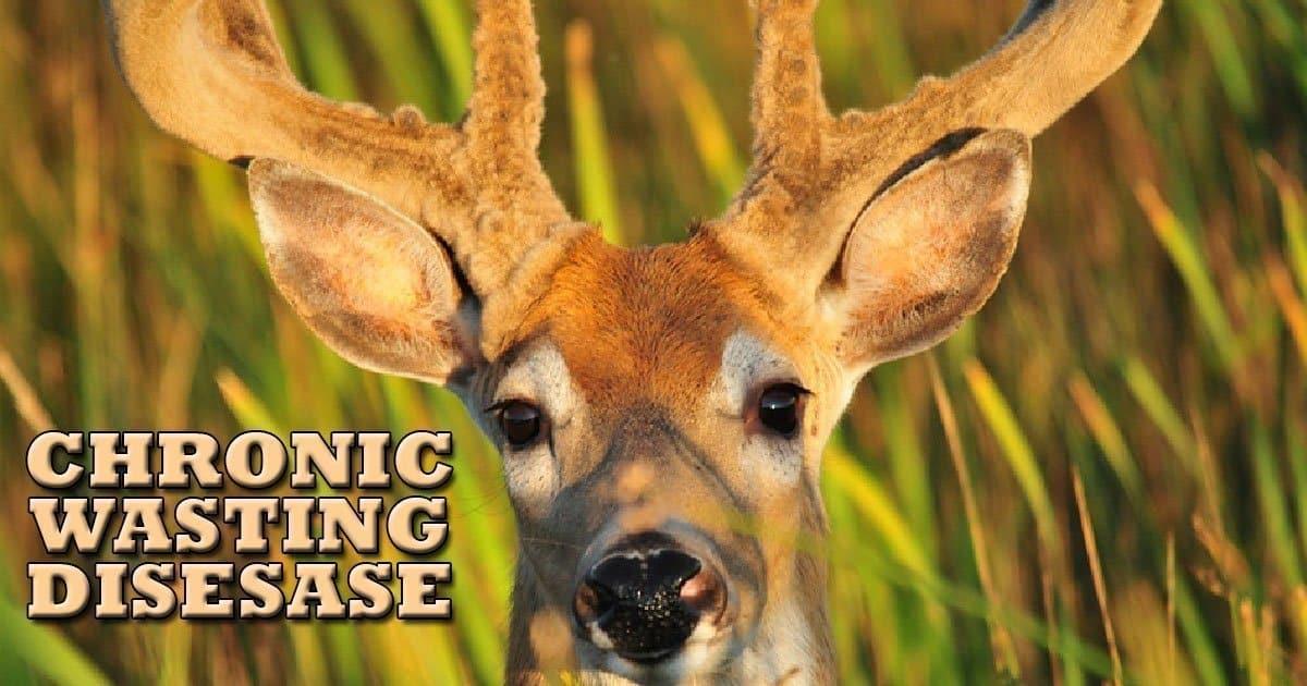 CHRONIC WASTING DISEASE deer USA