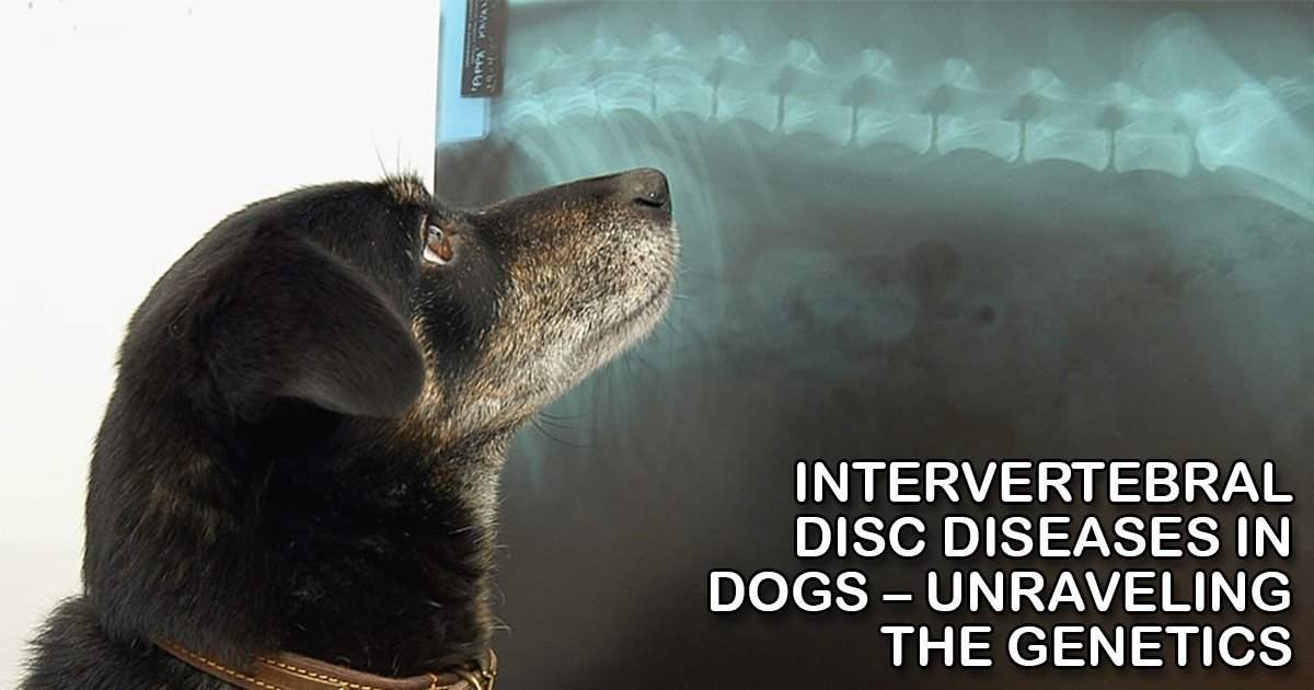 dog xray x-ray radiograph