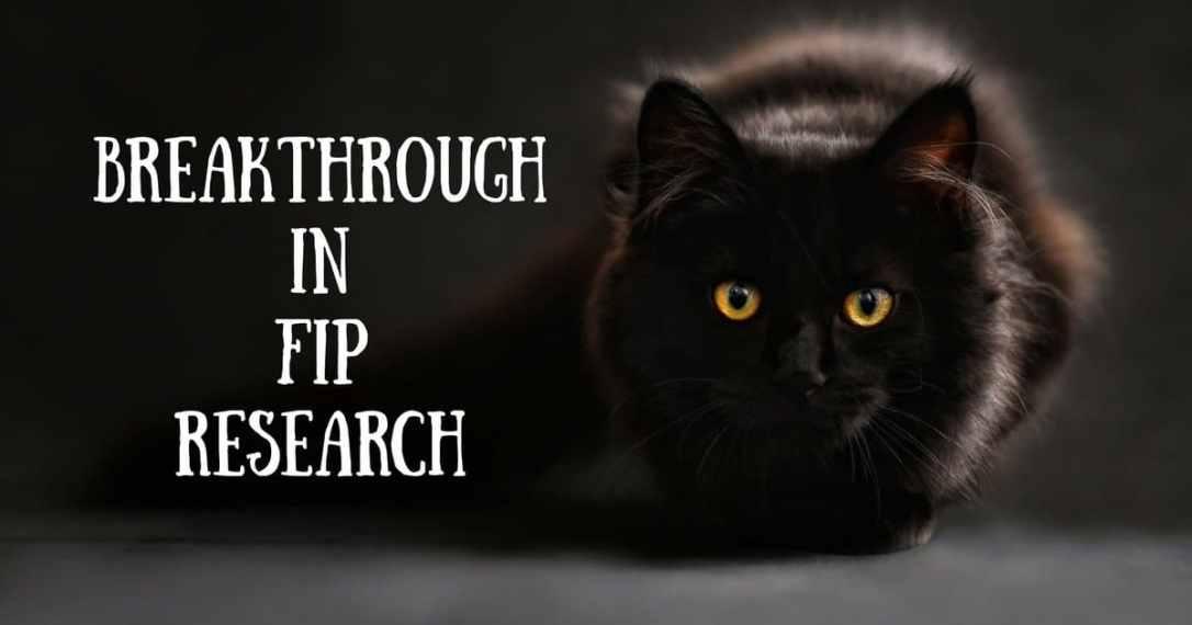 FIP Cats Feline