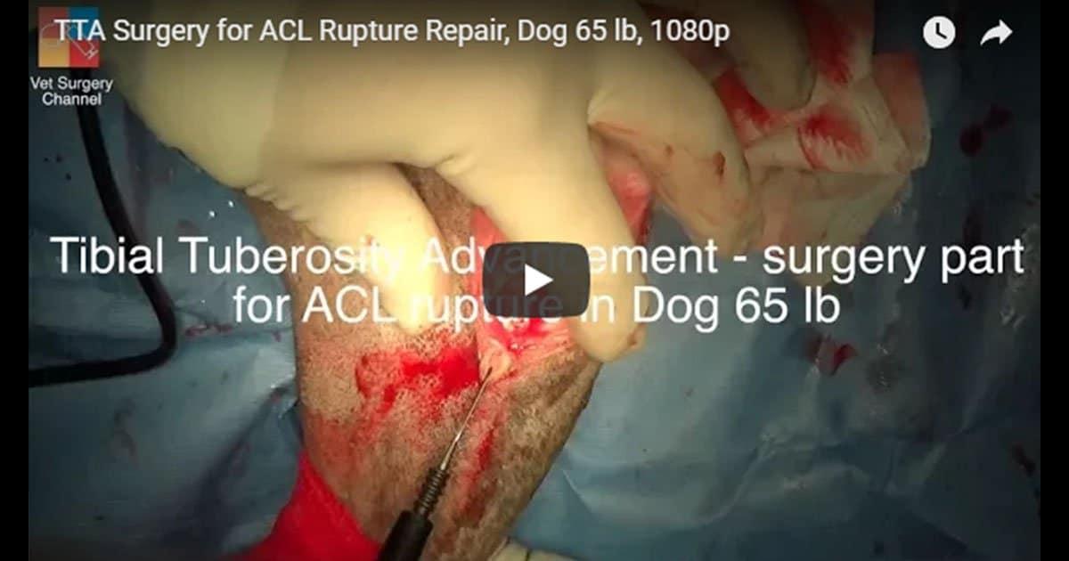 video i love veterinary vet surgery