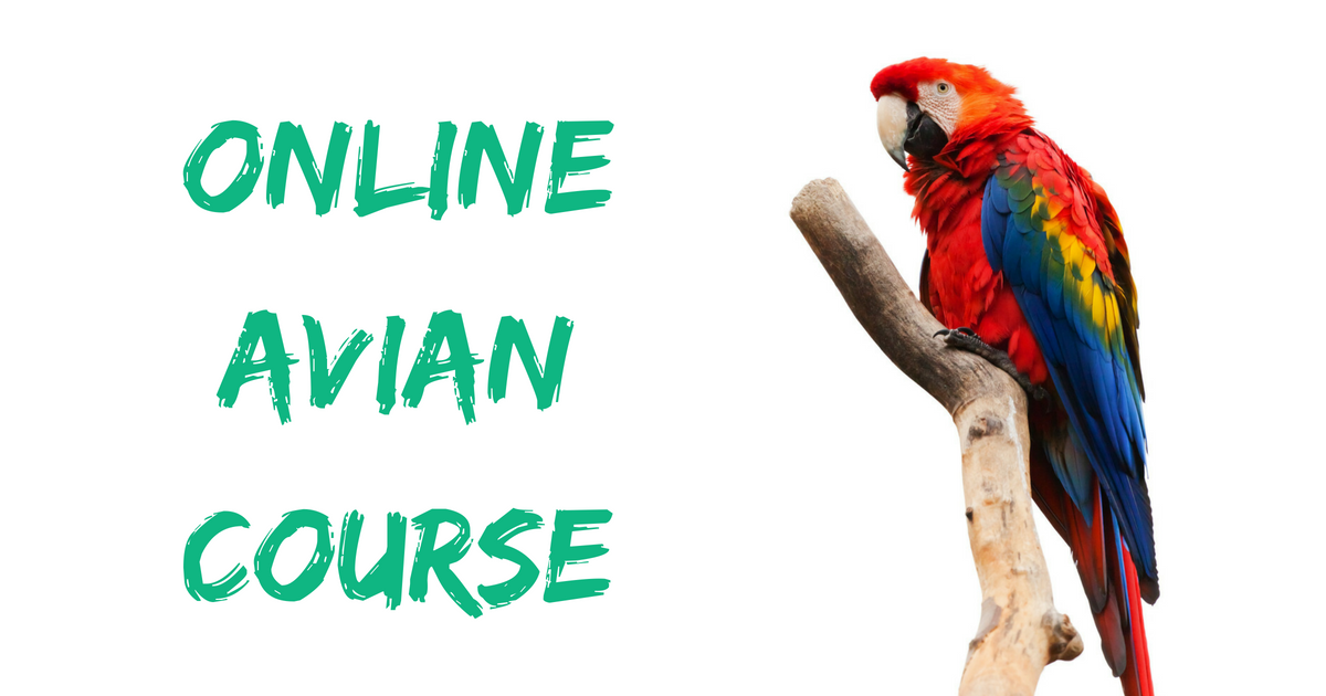 news: online avian course - parrot